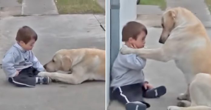 A special bond: Video captures the beautiful moment of a dog befriending a Down Syndrome boy